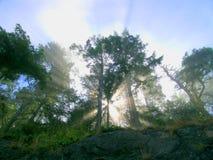 Sun-Lichtstrahlen Lizenzfreie Stockfotografie