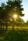 Sun-Lichtstrahlen durch Bäume Stockbild