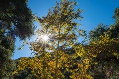 Sun-Lichtstrahlen Shine durch B?ume lizenzfreie stockfotografie