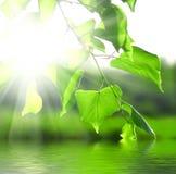 Sun-Lichtstrahlen und Grünblätter lizenzfreie stockfotografie