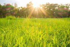 Sun light beam on park with tree green grass stock image