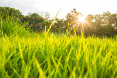 Sun light beam on park with tree green grass Stock Images