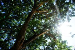 Sun light and Big tree Royalty Free Stock Photography