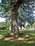Sun light through big tree on green lawn in tropical park Royalty Free Stock Photography