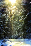 Sun light coming down during winter into the forest Stock Image
