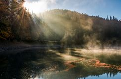 Sun light in fog over the mountain lake Synevyr. High altitude lake among spruce forest on beautiful autumn morning. sunning nature scenery royalty free stock image