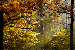 Sun light through foliage in autumn Stock Image