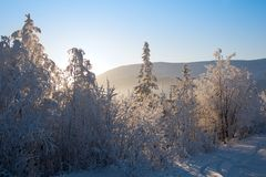 Sun light through frozen forest. Blue snowy mountain and clear sky on background royalty free stock photos