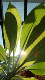 Sun light through the leaves Royalty Free Stock Photos