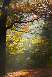 Sun light lit glade in autumn forest Stock Photography
