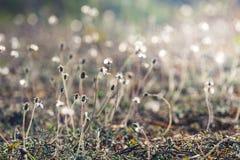 Sun light on meadow flowers Stock Image