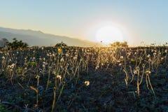 Sun light on meadow flowers Stock Photography