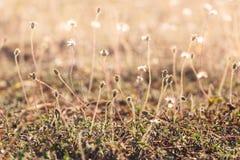 Sun light on meadow flowers Royalty Free Stock Photos