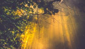 Sun light and mist. Scenic nature detailn royalty free stock photography