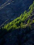 Sun light painting on the row of pine tree Stock Image