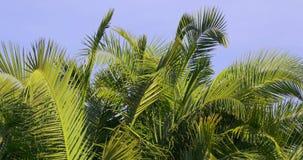 Sun light palm blue sky background 4k spain. Spain  sun light palm blue sky background 4k stock video footage