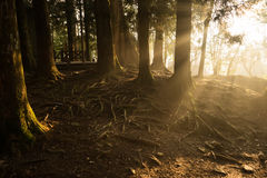 Sun light ray in forest. Stock Photography