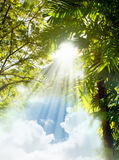 Sun light rays through trees Stock Photo