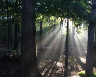 Sun light shinning through the trees in the back yard. Stock Photo