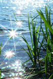 Sun light sparkle on wave. In river and cattail Royalty Free Stock Images