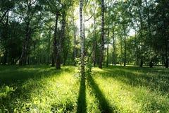 Sun light in summer Royalty Free Stock Photo