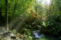 Sun light in a swamp Royalty Free Stock Photos
