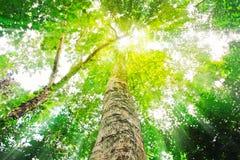Sun light top of mature trees Stock Photos