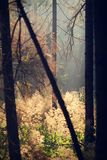 Sun light through the trees. Autumn forest royalty free stock image