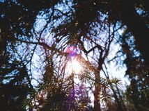 Sun light through trees in spring on sunny weather. Sun light trees spring sunny weather royalty free stock photography
