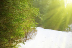 Sun light in the winter forest Stock Photography