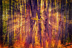 Sun light in wood Royalty Free Stock Photography