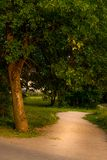 Sun-lighted tree in the forest path royalty free stock photos