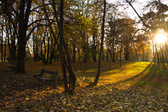 Sun lights in autumn park with bench Stock Photos