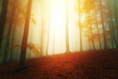 Sun lights in fantasy woods scenery with fog between trees. Mystery scene of forest stock image
