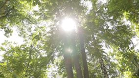 Sun lights up foliage at summer day in grove. Birch, acacia and other trees. Slowmotion shot stock footage