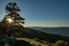 Sun lista através dos membros de um amanhecer do pinheiro Foto de Stock