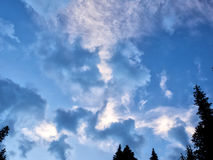 Sun lit clouds with conifer trees Stock Image
