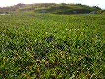 Sun lit dew grass Stock Image