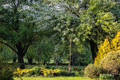 Sun-lit green garden with flowering apple, pear trees stock photography