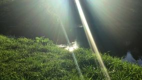 Sun lit lawn near water. Bright sun rays shining upon lush green grass near the river stock video footage