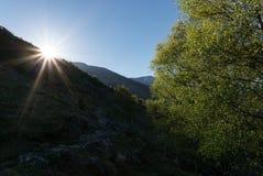 Sun lits tree Royalty Free Stock Image