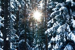 Sun looking through Winter Forest Stock Photo