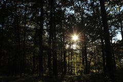 The sun looks out from behind a branch in a dark forest, beautiful autumn light royalty free stock photos