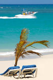 Sun lounger and palm on beach Stock Image