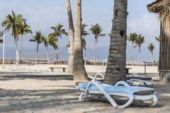 Sun lounger between palms tropical beach oman salalah souly bay Stock Photo