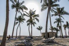Sun lounger between palms tropical beach oman salalah souly bay  Royalty Free Stock Image