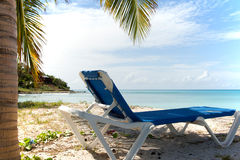 Sun lounger under palm tree Stock Image