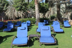 Sun loungers on the grass under palm trees. Rows of blue and whicker sun loungers on the grass under palm trees at a luxury resort symbolizing vacations royalty free stock image