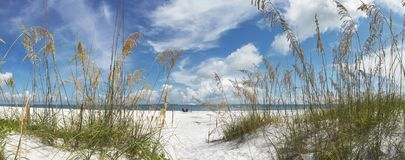 Sun Loungers by sea. Panoramic view looking through reeds of sunloungers and umbrella on a beach royalty free stock photography