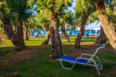 Sun loungers among the trees on the seafront Royalty Free Stock Photography